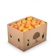 Kan Portakalı 6kg